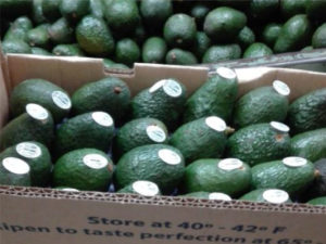 Ayco Farms - Our Farms |Our Team | Your Future | Produce